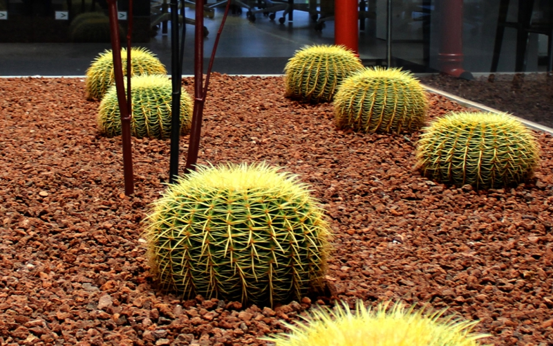 Jardín Xérico Accenture